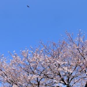 金沢の街、静かだよ~