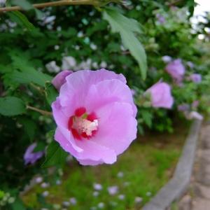 日本の国花って知ってる?