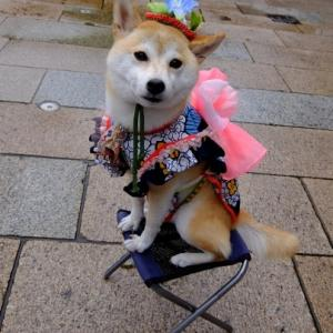 究極のコスチューム犬?