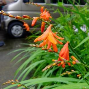 梅雨空の下、オレンジ色がキレイ!