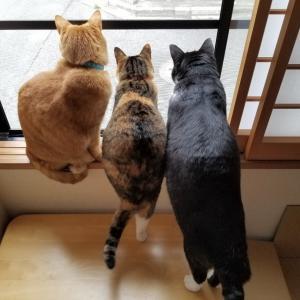 はさまる猫