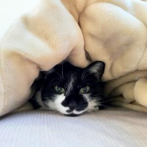 猫写真レッスンのススメ