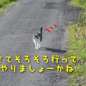 スリラー系映画鑑賞