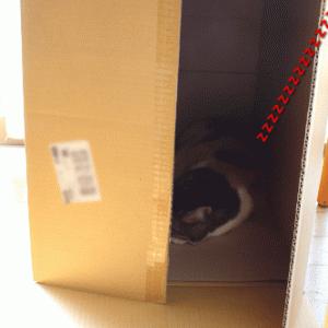 万能BOX