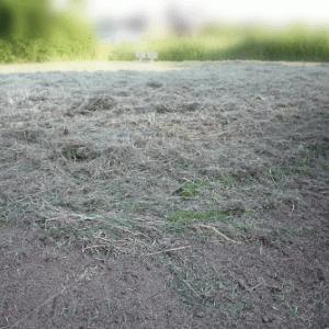 草刈り後の草むらは交流の場