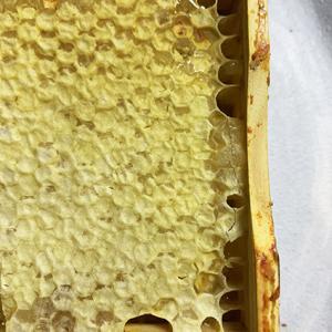 食べるハチの巣