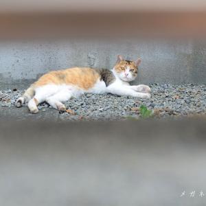 【昔 撮った散歩写真】路地で出会った猫 & 買い物に迷う