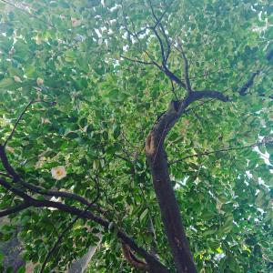 小石川植物園で土あそび