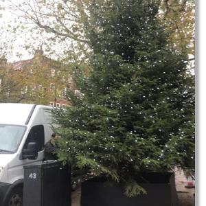 クリスマスツリーが飾られ始めました