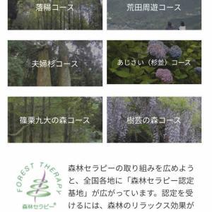 篠栗森林セラピーウォーキング