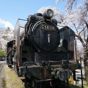 『城山公園(岩出山城址)』の桜