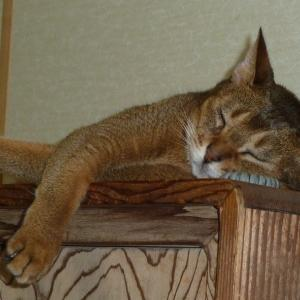 9月・株売買結果 電話機を枕に眠る「レイア姫」