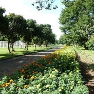 8月株・売買結果     越谷:福祉村公園の残暑