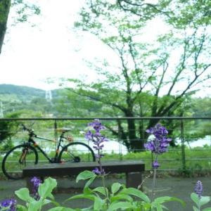 sakeの歩窓から(津久井湖城山公園)