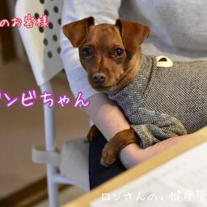 鹿ごはん試食会☆20200327☆