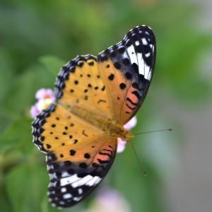 今朝の一枚☆昆虫です、閲覧注意☆AC