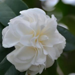 庭の花(自宅にて)