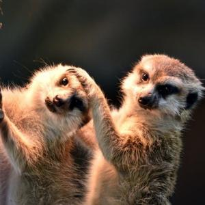子供達と動物園見学をする「那須どうぶつ王国」
