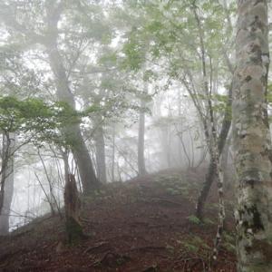 御坂山塊「黒岳」を登る