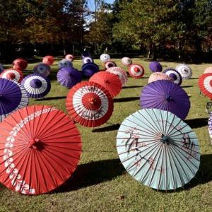 立川市「昭和記念公園」秋の色を求めて編