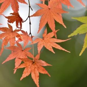都会の秋色を探す。