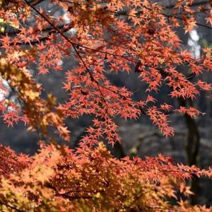 秋色を求め(2)「川崎市高津区東高根森林公園」にて