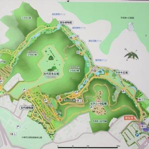 再び「川崎市東高根森林公園」へ