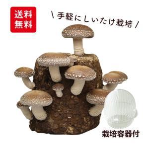 しいたけ栽培♡1980円⇒1500円!!