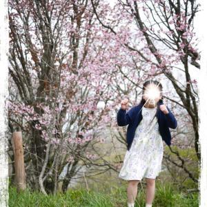 2765 桜満開♡