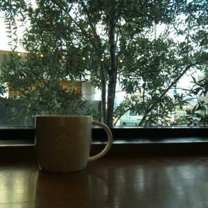 今日のソトカフェ「宝持スタバ」