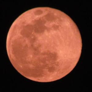 満月!絶好のチャンスを・・・