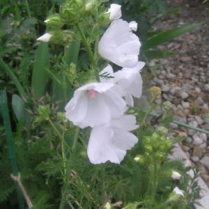 白い花&デルフォニウム