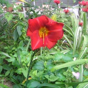 朱赤の花&ゼラニウム