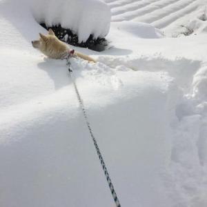 ネコの散歩はしなくていいのかな。