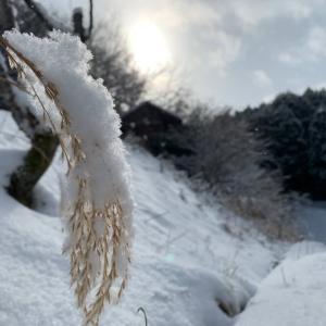 雪が降ると写真が増える。