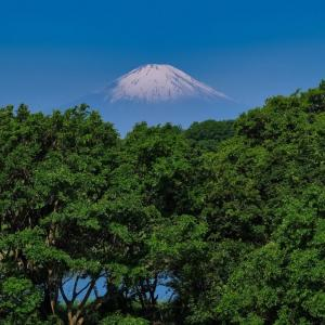 19/May FujifilmX-Tシリーズで花鳥風月