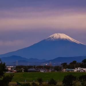 20/Oct 朝の富士山とカワセミホバリングと真弓の実