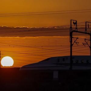 28/Nov 朝陽とのぞみと富士山と野鳥と紅葉