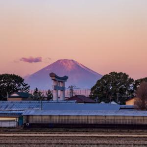 19/Jan 朝焼けの富士山と野鳥たち
