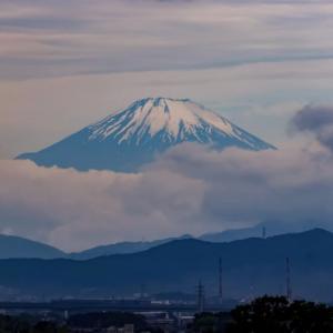 2021/05/22 朝の富士山🗻とカワセミの幼鳥