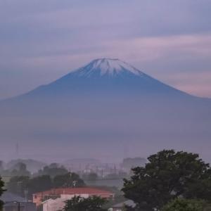 28/May  富士山と花と野鳥たち