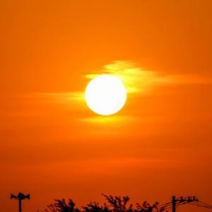 08/Jun  朝陽とアマサギとカワコと夏椿