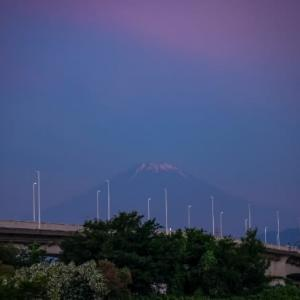 18/Jun 朝焼けの富士山と蓮池のカワセミ
