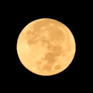 21/Sep  中秋の名月と富士山とミサゴとアマツバメ