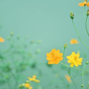 散歩中に見つけた花々♪