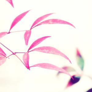 Leaf&Flower♪