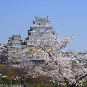 姫路城と桜♪
