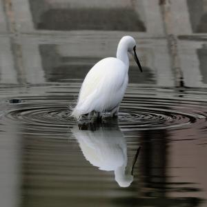 水辺の鳥♪