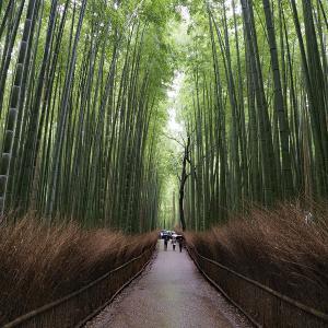 竹林の道♪