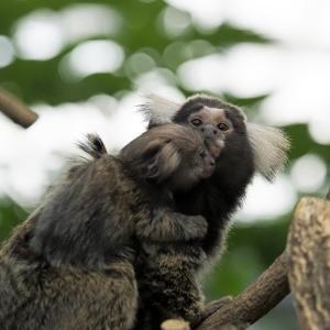 小さなお猿ちゃん♪